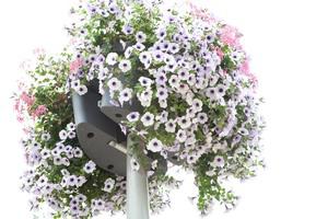 hanging basket florabasket arnhem